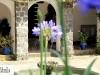 hacienda-pinsaqui-fuente_0